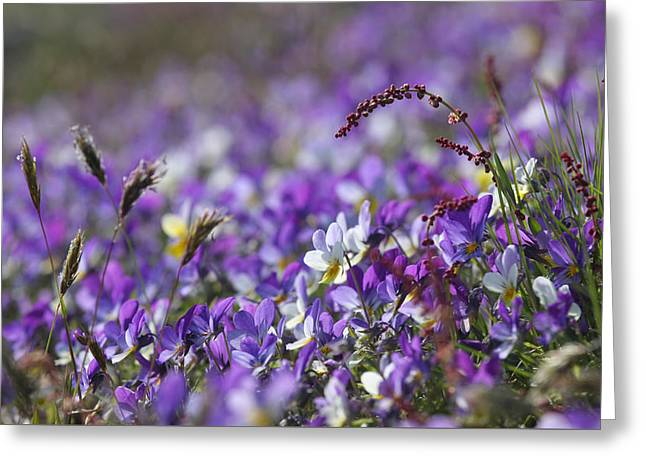 Purple Flower Bed Greeting Card