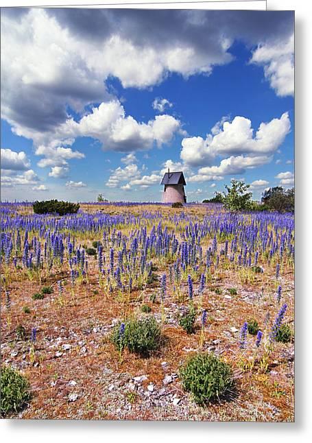 Purple Flower Countryside Greeting Card