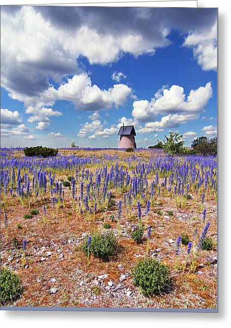 Purple Flower Countryside Greeting Card