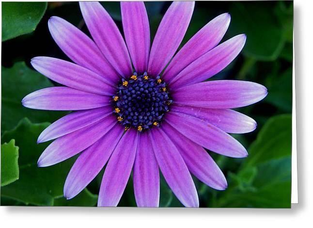 Purple Flower Greeting Card by Pamela Walton