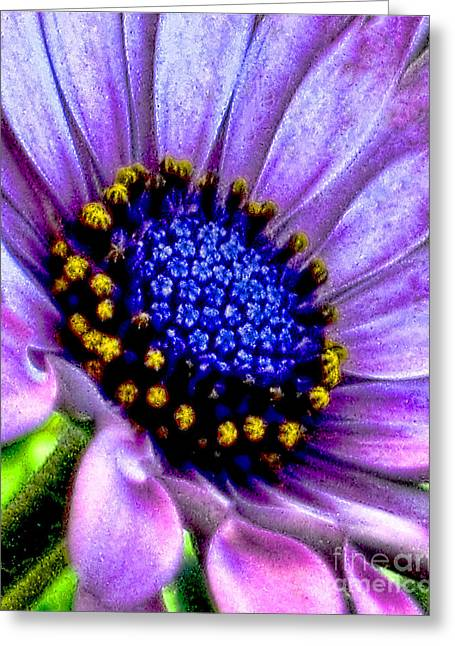 Purple Flower Sensation Greeting Card