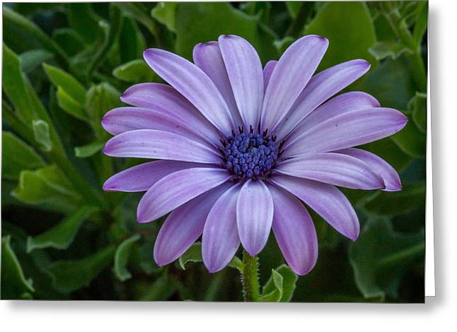 Greeting Card featuring the photograph Purple Flower  by Trace Kittrell