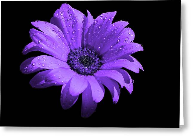 Purple Flower With Rain Greeting Card by Bruce Nutting