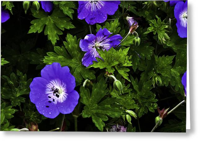 Greeting Card featuring the photograph Purple Flower01 by Timothy Latta