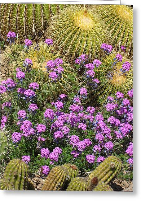 Purple Flowers And Barrel Cacti Greeting Card