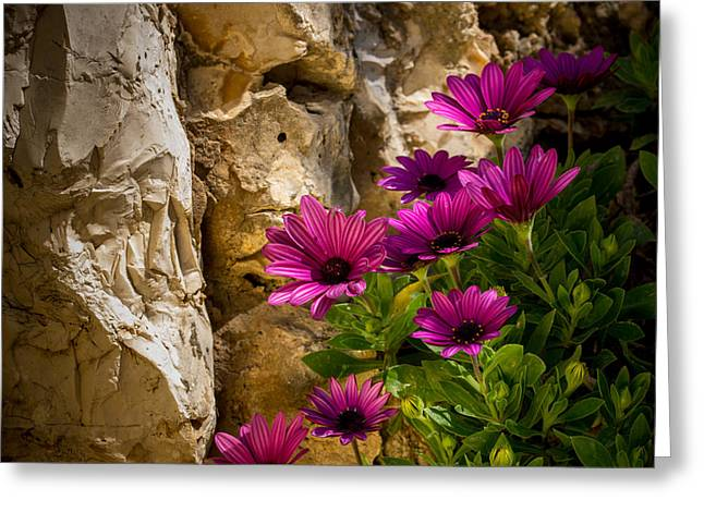Purple Flowers And Rocks Greeting Card