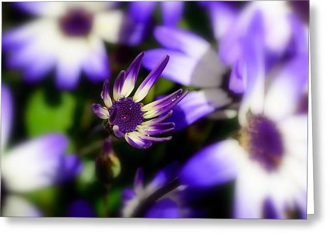 Purple Flowers Greeting Card by Barbara Walsh