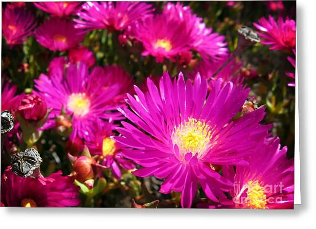 Purple Flowers Greeting Card by Jelena Jovanovic