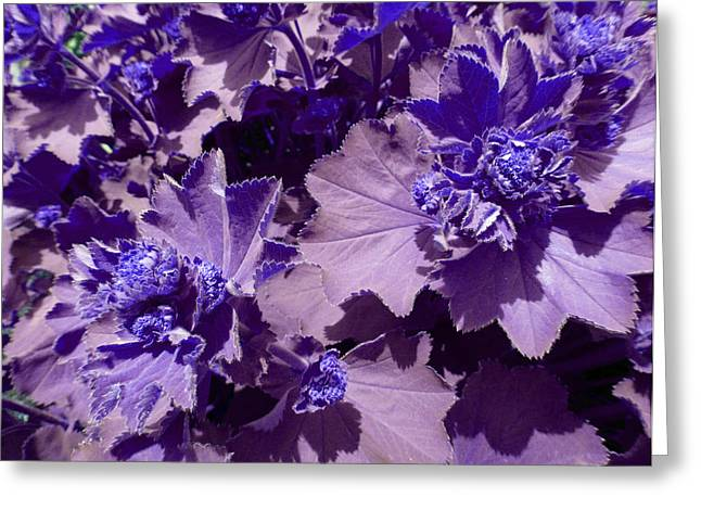 Greeting Card featuring the photograph Purple Flowers by Laurie Tsemak