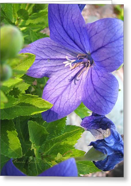 Purple Flowers Majesty Greeting Card by Brooks Garten Hauschild