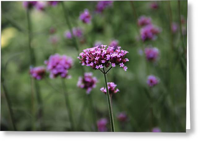 Purple Flowers Greeting Card by Michael Demagall