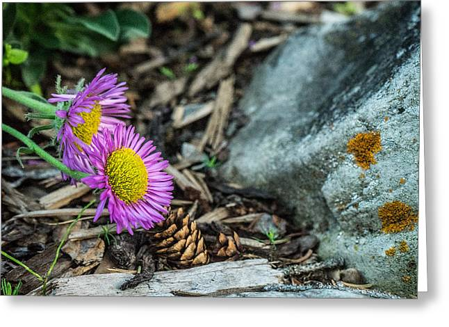 Purple Flowers Pine Cones And Lichens Greeting Card