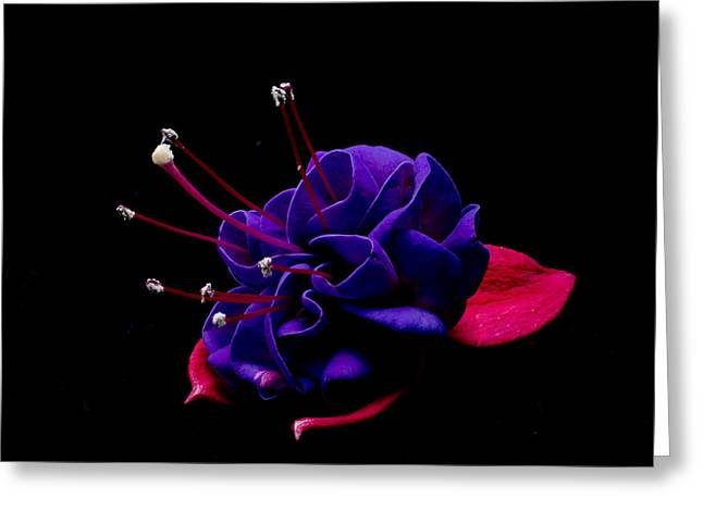 Purple Fushia Greeting Card