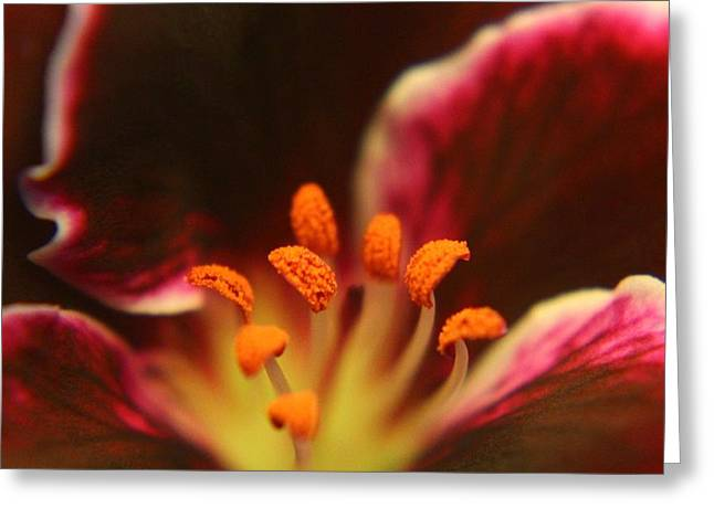 Purple Geranium Center Greeting Card by Carol Welsh