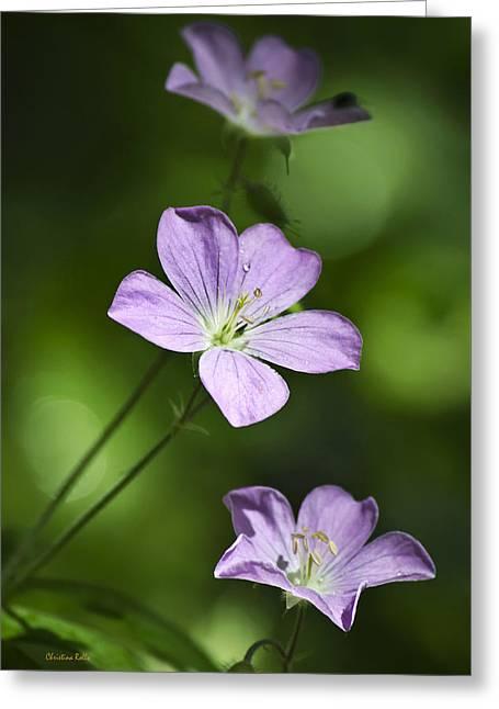 Purple Geranium Flowers Greeting Card by Christina Rollo