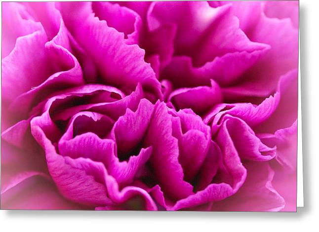 Purple Geranium In Macro Greeting Card by Elizabeth Thomas