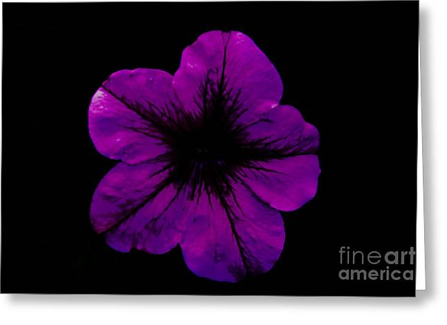 Greeting Card featuring the photograph Purple Geranium by Scott Lyons