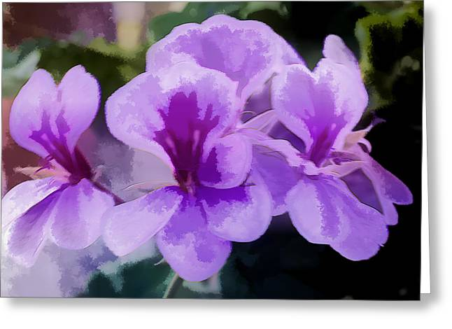 Purple Geraniums  Greeting Card by Photographic Art by Russel Ray Photos