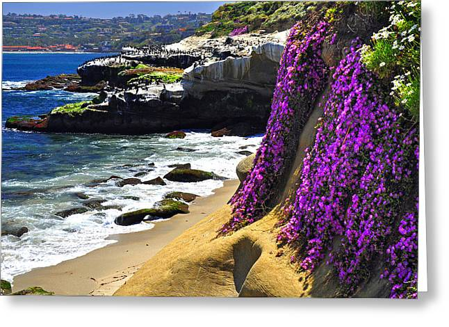 Purple Glory At La Jolla Cove Greeting Card by John Hoffman