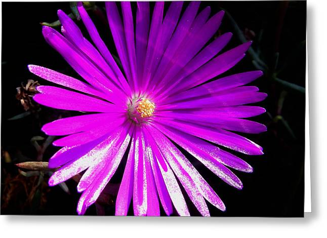 Purple Glow Greeting Card by Pamela Walton