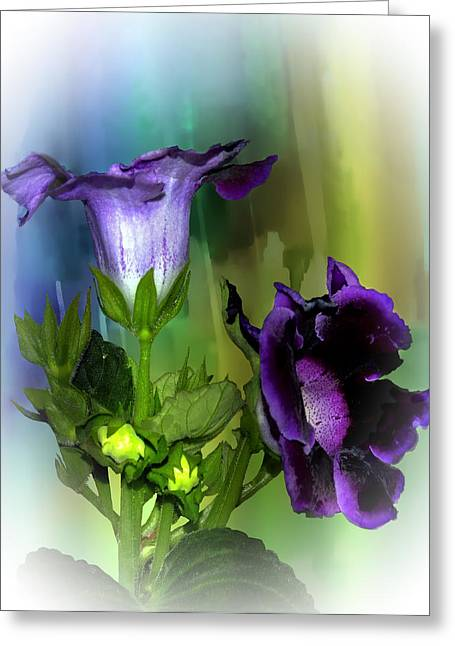 Purple Gloxinia II Greeting Card