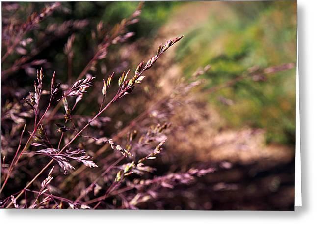 Purple Grass Greeting Card by Kaleidoscopik Photography