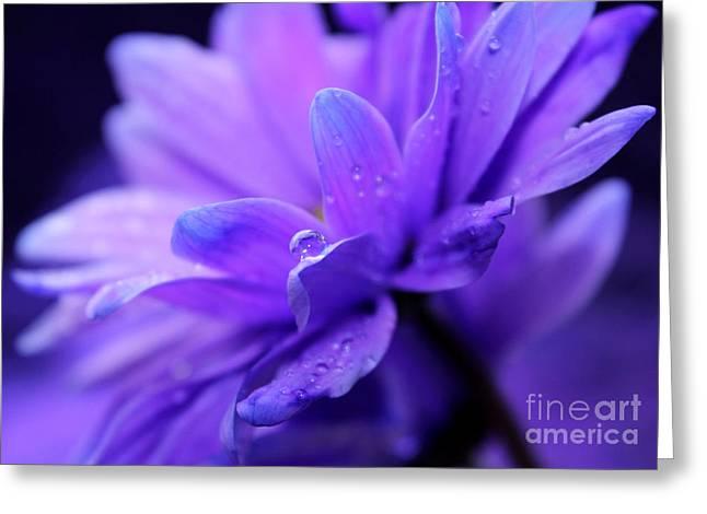 Purple Harmony Greeting Card