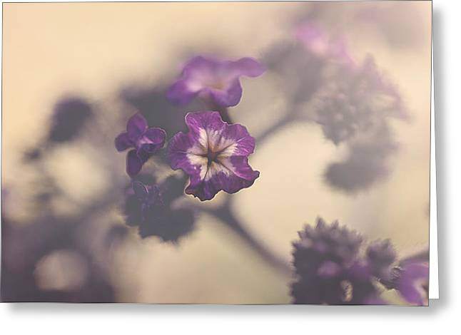 Purple Haze Greeting Card by Faith Simbeck