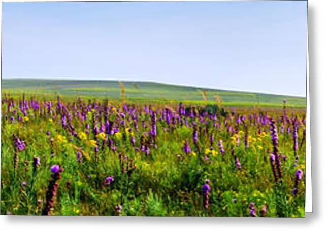Purple Hills Greeting Card