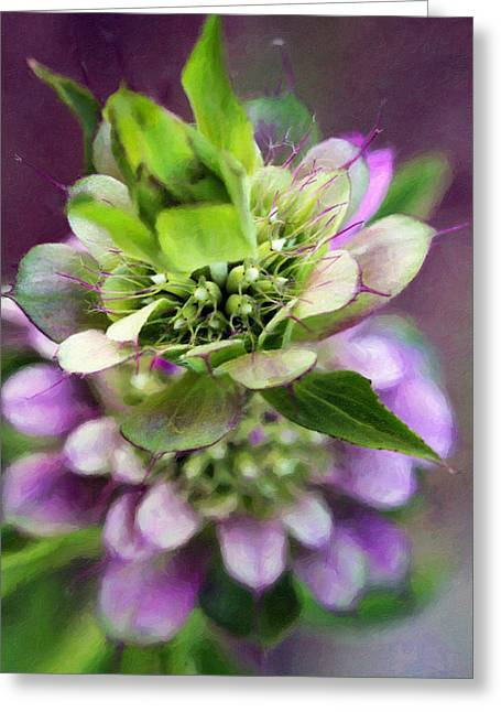 Purple Horsemint Wildflower Greeting Card by Susan Schroeder
