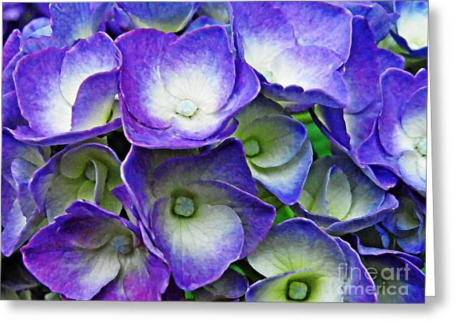 Purple Hydrangea Greeting Card by Sarah Loft