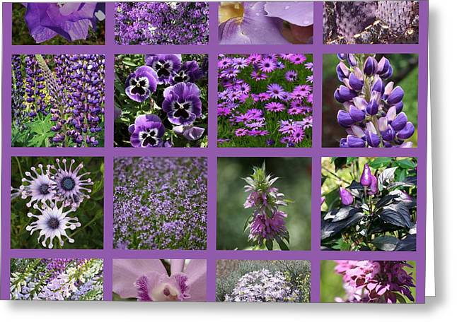 Purple In Nature Collage Greeting Card by Carol Groenen