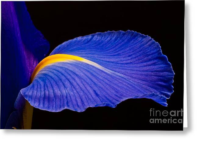 Purple Iris #1 2010 Greeting Card