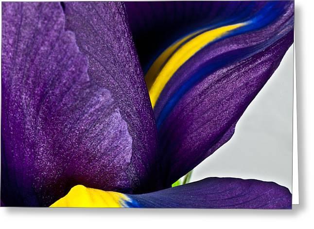 Purple Iris  #2 2010 Greeting Card