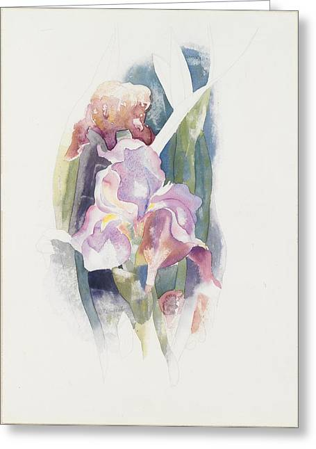 Purple Iris Greeting Card by Charles Demuth