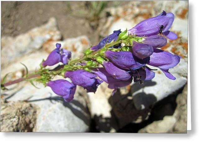 Purple Joy Greeting Card by Mike Podhorzer