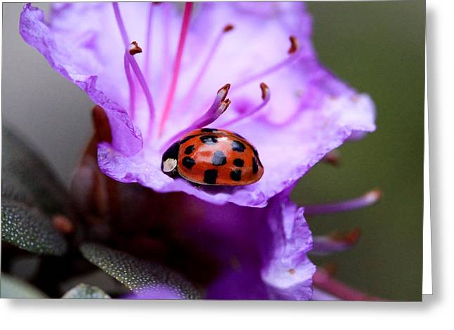 Purple Lady Greeting Card by Aaron Aldrich