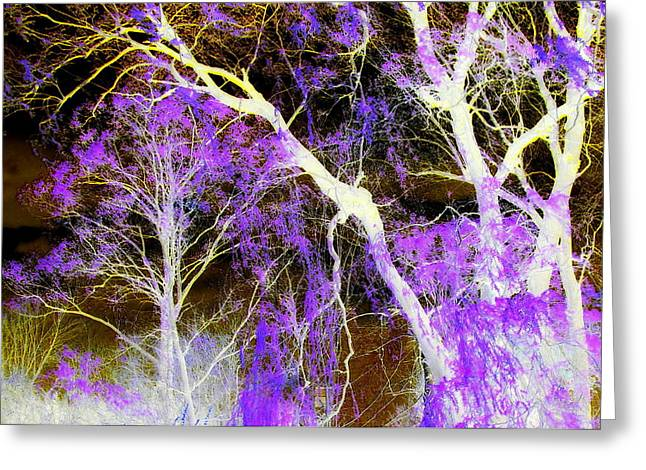 Purple Leaves And White Trees Greeting Card