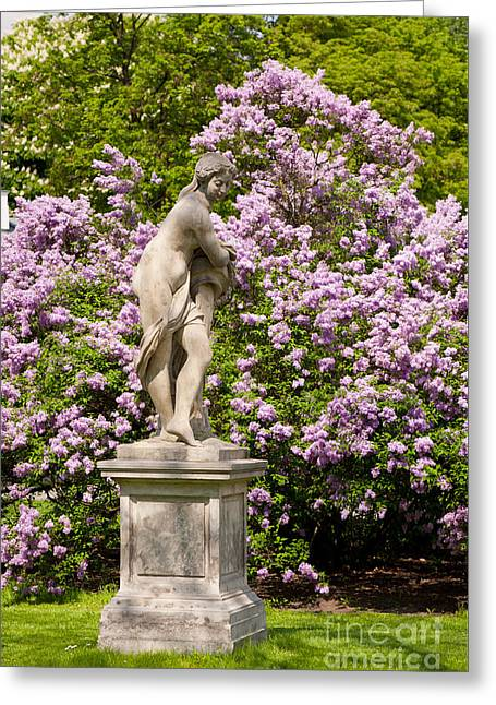 Purple Lilac And Naked Woman Statue  Greeting Card by Arletta Cwalina