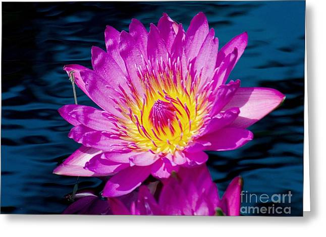 Purple Lily On The Water Greeting Card