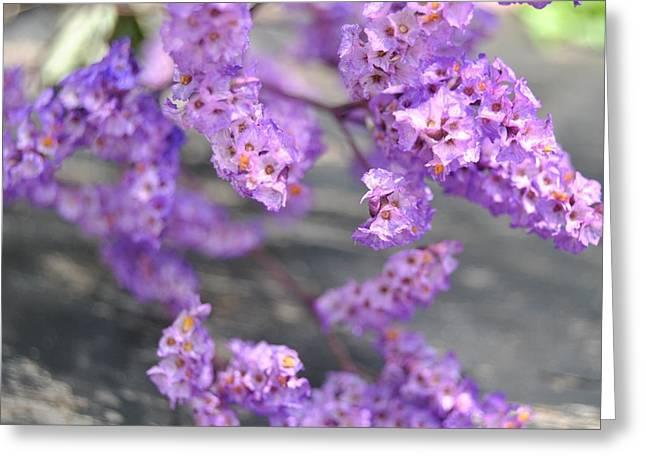 Purple Limonium Greeting Card by Page Lobach