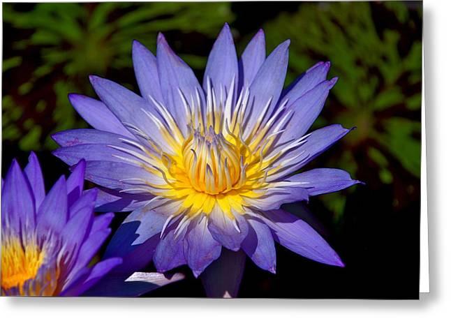 Purple Lotus Close Up Greeting Card