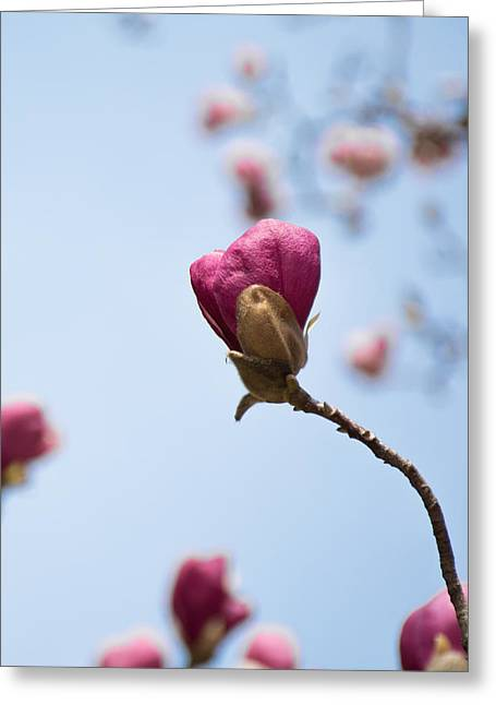 Purple Magnolia Single Greeting Card by Priyanka Ravi