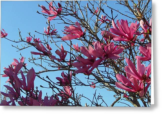 Purple Magnolias Greeting Card