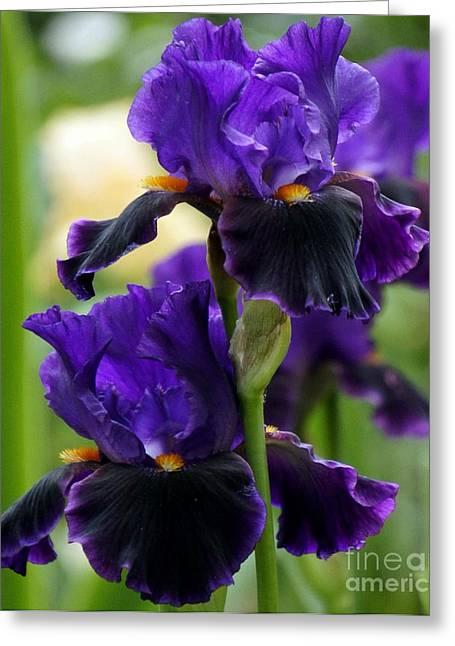 Purple Majesty Greeting Card by Lilliana Mendez