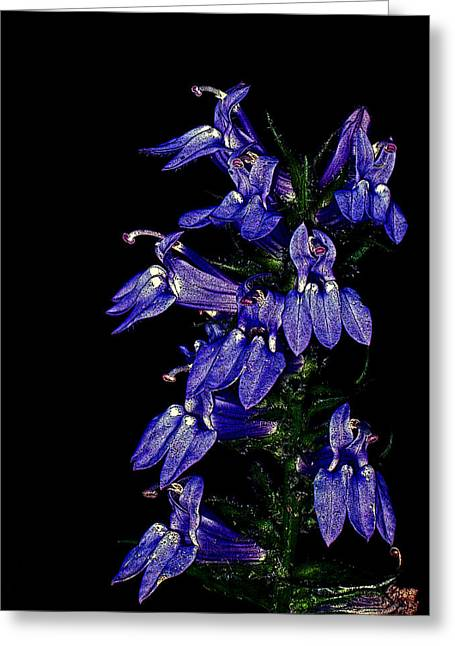 Greeting Card featuring the photograph Purple On Black by David Stine
