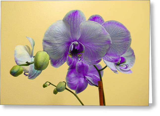 Purple Orchid Greeting Card by Christy Usilton