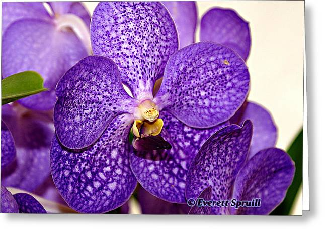 Purple Orchid Greeting Card by Everett Spruill