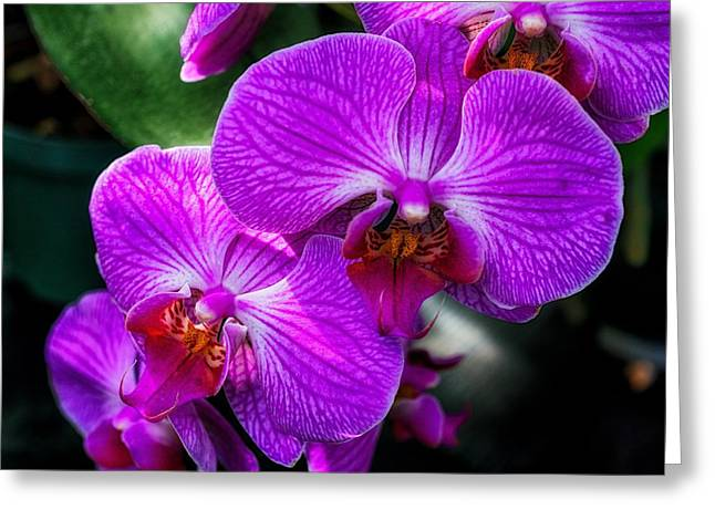 Purple Orchid Glow Greeting Card