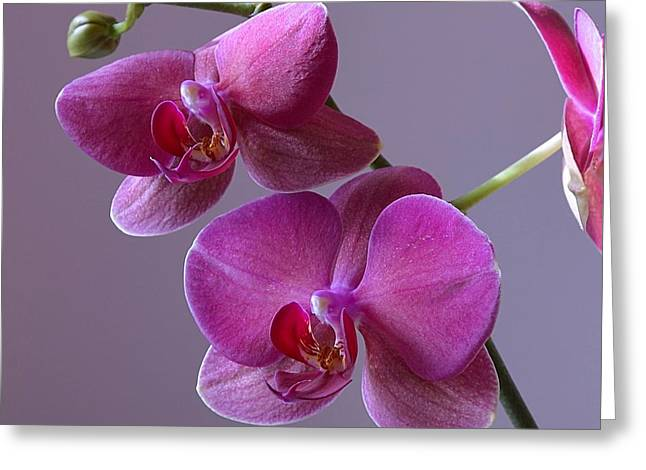 Purple Orchid Greeting Card by Kathy Eickenberg
